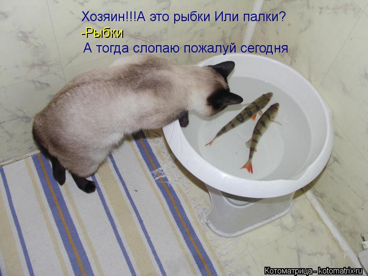 Котоматрица: Хозяин!!!А это рыбки Или палки? -Рыбки А тогда слопаю пожалуй сегодня