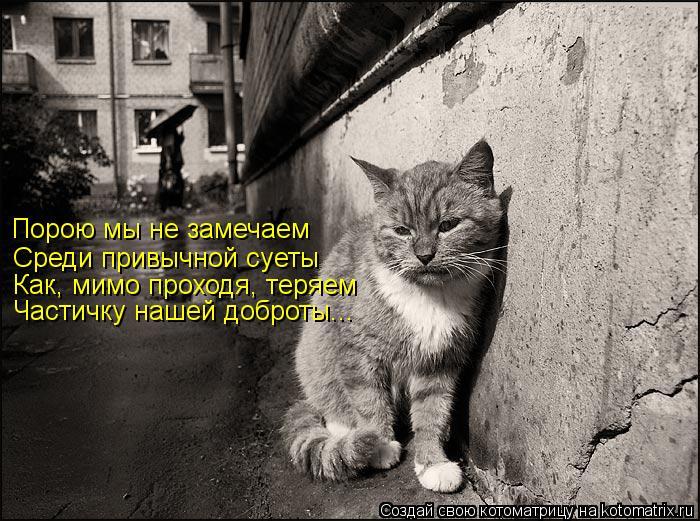 Котоматрица: Порою мы не замечаем Среди привычной суеты Как, мимо проходя, теряем  Частичку нашей доброты...