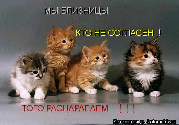 Котоматрица: МЫ БЛИЗНИЦЫ  КТО НЕ СОГЛАСЕН ! ТОГО РАСЦАРАПАЕМ ! ! !