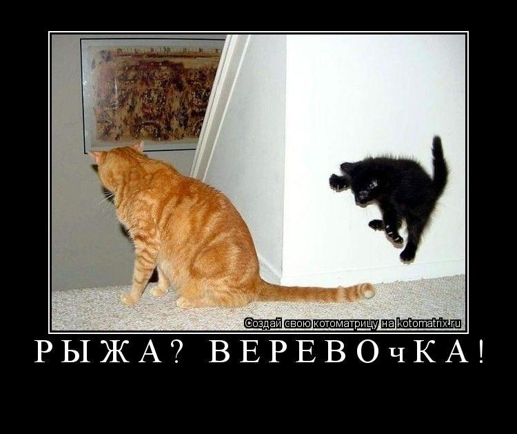 Котоматрица: Рыжая веревочка!