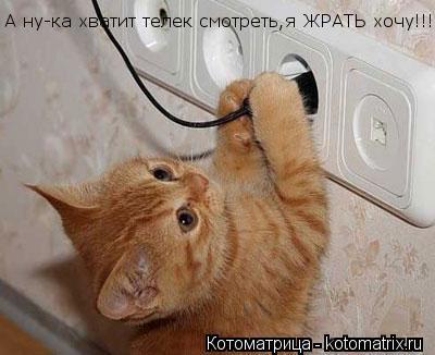 Котоматрица: А ну-ка хватит телек смотреть,я ЖРАТЬ хочу!!!!