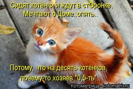 """Котоматрица: Сидят котёнки и ждут в стОронке, Мечтают о Доме..опять.. Потому, что на десять котёнков, почему-то хозяев """"0,5-ть"""".."""
