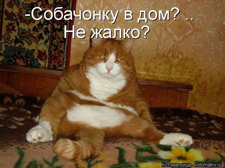 Котоматрица: -Собачонку в дом? .. Не жалко?