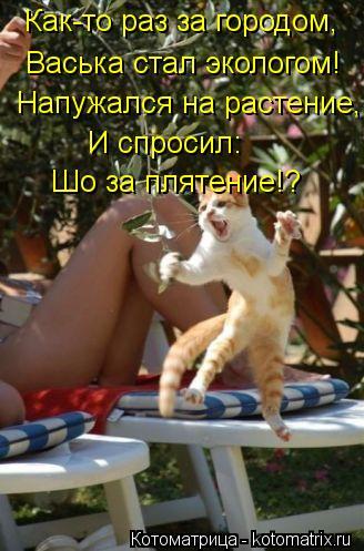 Котоматрица: Как-то раз за городом, Васька стал экологом! Напужался на растение, И спросил: Шо за плятение!?