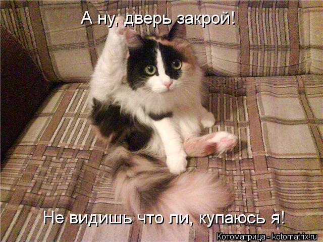Котоматрица: А ну, дверь закрой! Не видишь что ли, купаюсь я!