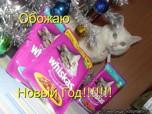 Котоматрица: Обожаю  Новый Год!!!!!!!
