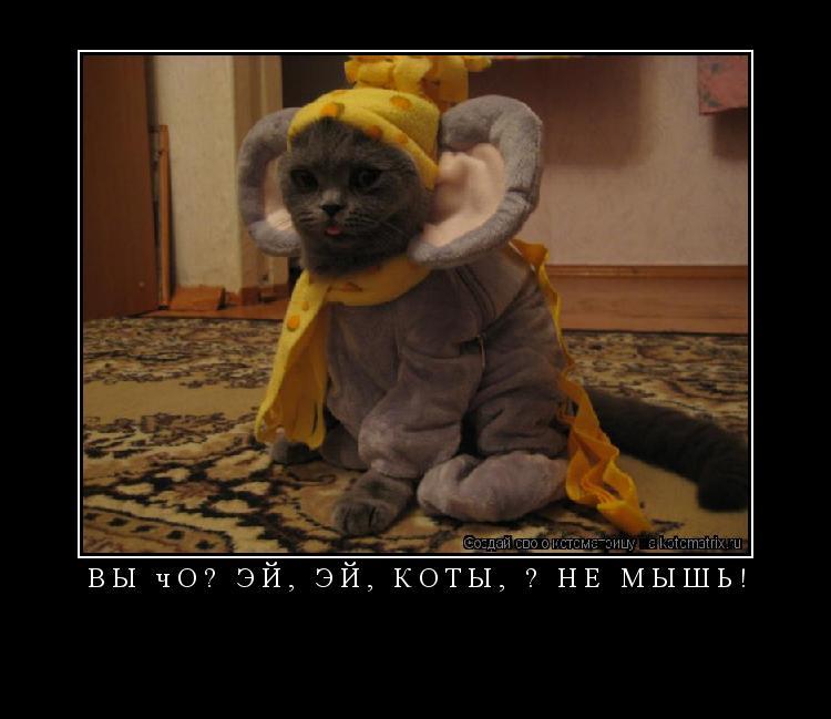 Котоматрица: Вы чо? Эй, эй, коты, я не мышь!