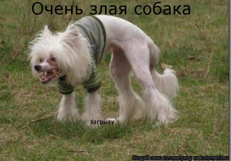 Котоматрица: Очень злая собака загрызу