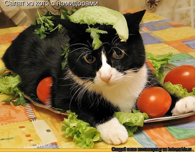 Котоматрица: Салат из котэ с помидорами