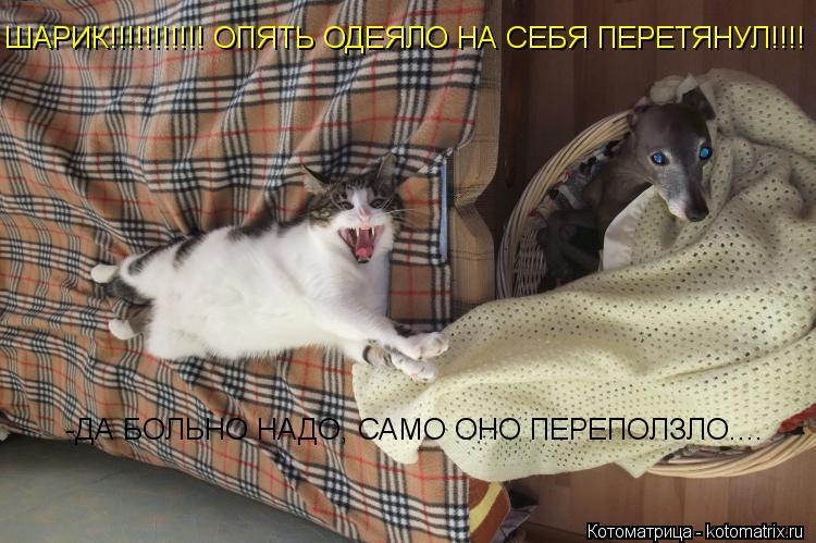 Котоматрица: ШАРИК!!!!!!!!!!! ОПЯТЬ ОДЕЯЛО НА СЕБЯ ПЕРЕТЯНУЛ!!!! -ДА БОЛЬНО НАДО, САМО ОНО ПЕРЕПОЛЗЛО....