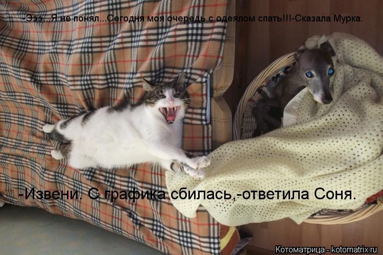 Котоматрица: -Эээ...Я не понял...Сегодня моя очередь с одеялом спать!!!-Сказала Мурка. -Извени. С графика сбилась,-ответила Соня.