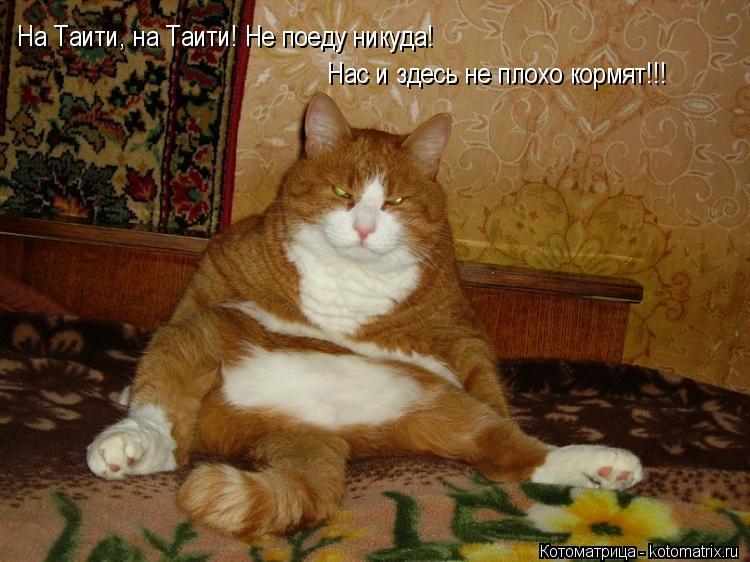 Котоматрица: На Таити, на Таити! Не поеду никуда! Нас и здесь не плохо кормят!!! На Таити, на Таити! Не поеду никуда!  Нас и здесь не плохо кормят!!!