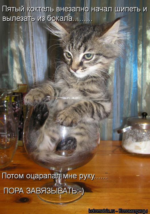 Котоматрица: Пятый коктель внезапно начал шипеть и  вылезать из бокала......... Потом оцарапал мне руку...... Потом оцарапал мне руку...... ПОРА ЗАВЯЗЫВАТЬ:-)