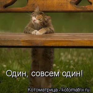 Котоматрица: Один, совсем один!