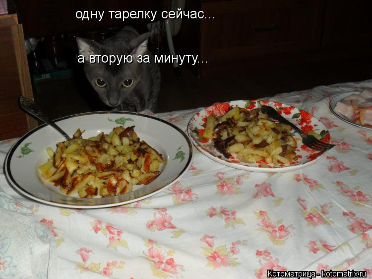 Котоматрица: одну тарелку сейчас... а вторую за минуту...