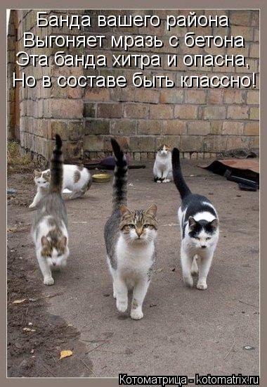 Котоматрица: Банда вашего района Выгоняет мразь с бетона Эта банда хитра и опасна, Но в составе быть классно!
