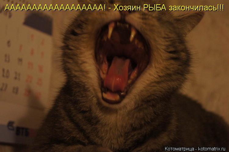 Котоматрица: АААААААААААААААААА! - Хозяин РЫБА закончилась!!!