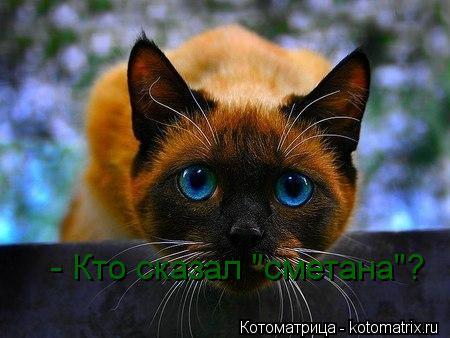 "Котоматрица: - Кто сказал ""сметана""?"