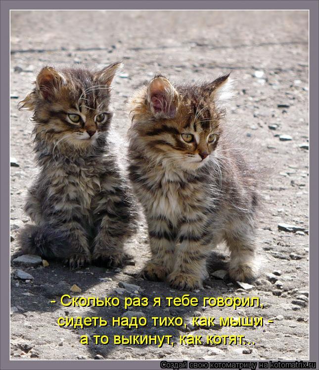 Котоматрица: - Сколько раз я тебе говорил,  а то выкинут, как котят... сидеть надо тихо, как мыши -