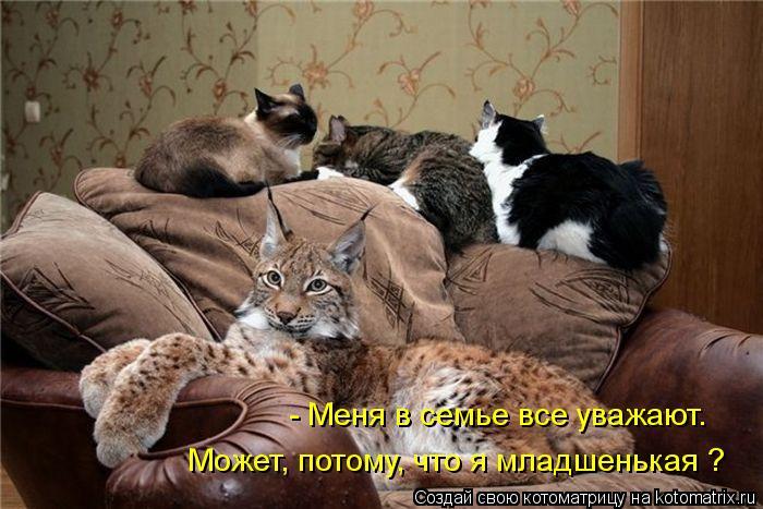 http://kotomatrix.ru/images/lolz/2012/06/10/4.jpg