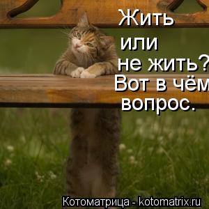 Котоматрица: Жить  или не жить? Вот в чём вопрос.