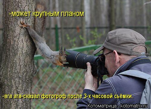 Котоматрица: -может крупным планом -ага ага-сказал фотогроф после 3-х часовой сьёмки.
