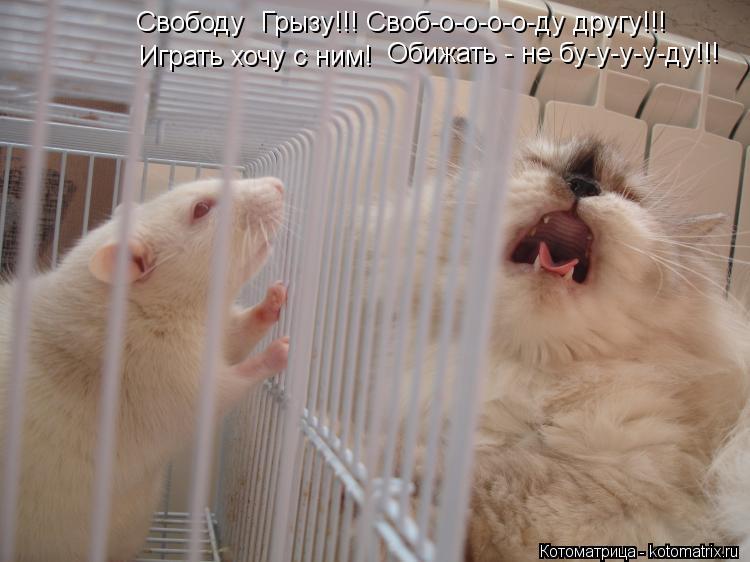 Котоматрица: Свободу  Грызу!!! Своб-о-о-о-о-ду другу!!! Играть хочу с ним! Обижать - не бу-у-у-у-ду!!!
