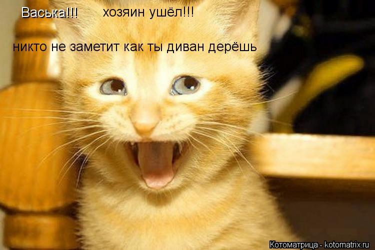 Котоматрица: Васька!!! хозяин ушёл!!! никто не заметит как ты диван дерёшь