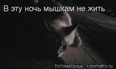 Котоматрица: В эту ночь мышкам не жить...