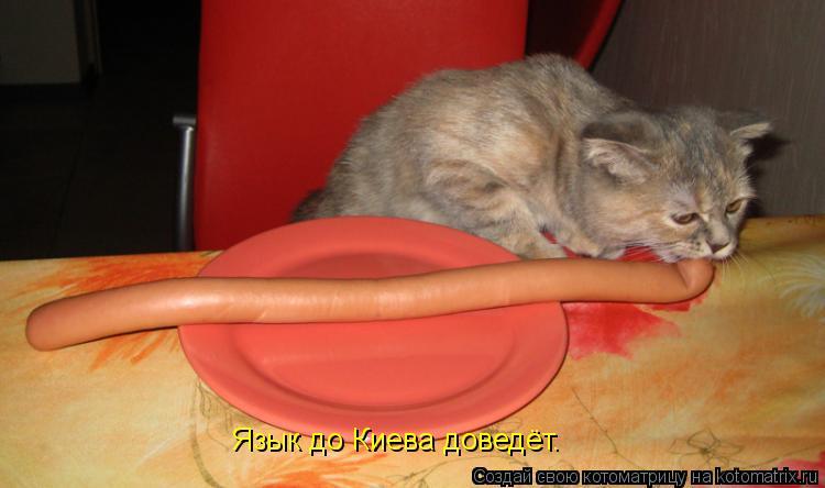 Котоматрица: Язык до Киева доведёт.