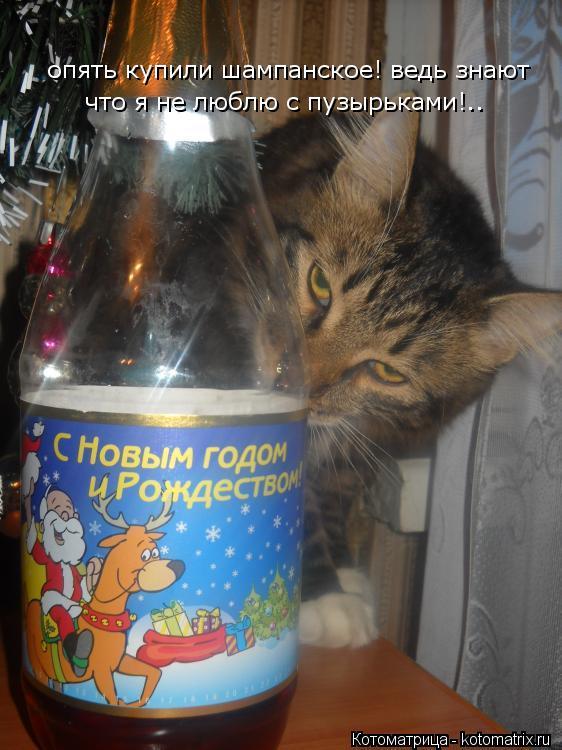 Котоматрица: опять купили шампанское! ведь знают что я не люблю с пузырьками!..