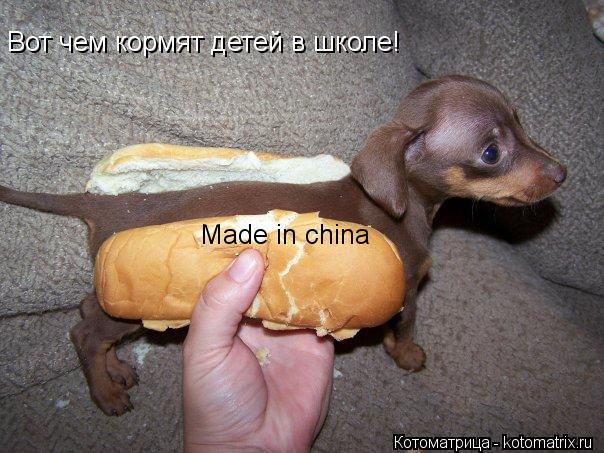 Котоматрица: Вот чем кормят детей в школе! Made in china
