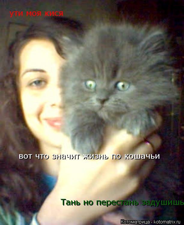 Котоматрица: Тань но перестань задушишь ути моя кися вот что значит жизнь по кошачьи