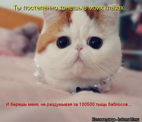 Котоматрица: Ты постепенно тонешь в моих глазах... И берешь меня, не раздумывая за 100500 тыщь баблосов...