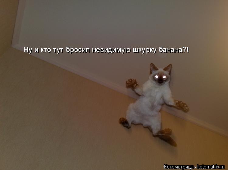 Котоматрица: Ну и кто тут бросил невидимую шкурку банана?!  Ну и кто тут бросил невидимую шкурку банана?!