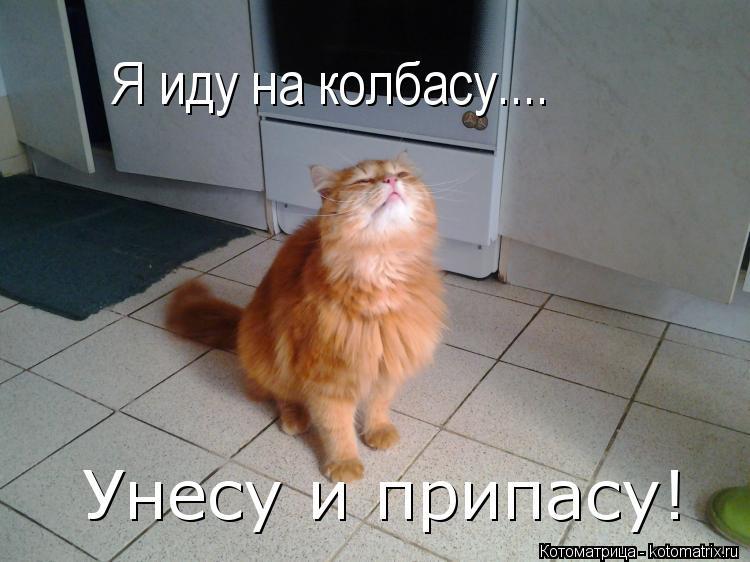 Котоматрица: Я иду на колбасу.... Унесу и припасу!