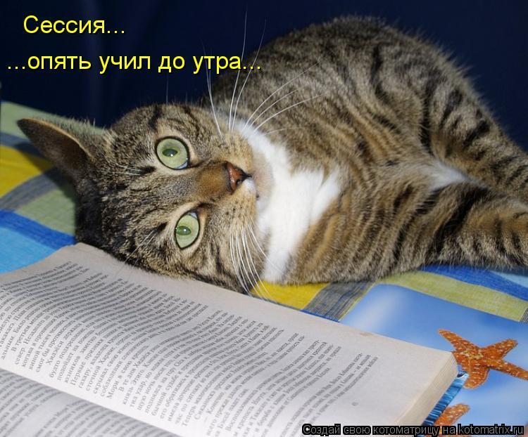 Котоматрица: Сессия... ...опять учил до утра...