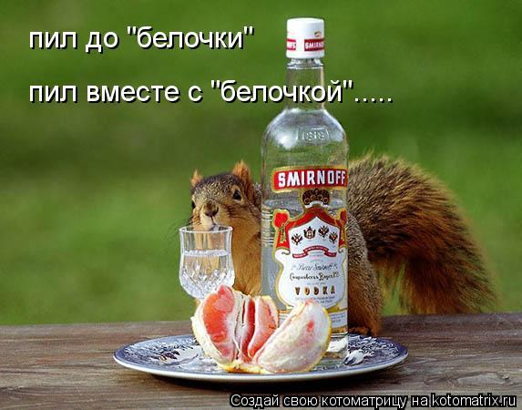 """Котоматрица: пил до """"белочки"""" пил вместе с """"белочкой""""....."""
