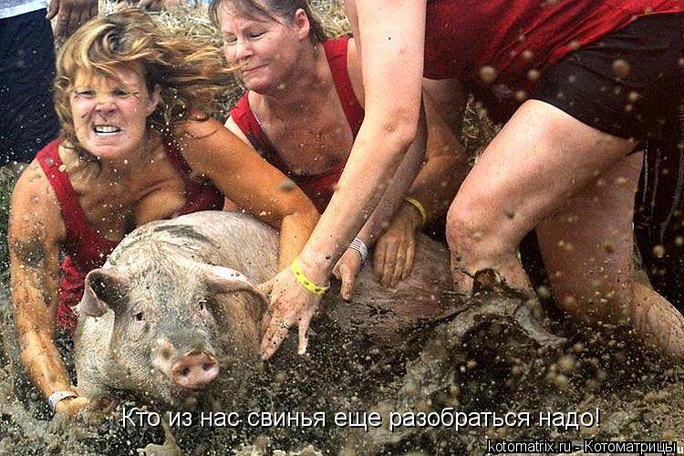 Котоматрица: Кто из нас свинья еще разобраться надо!