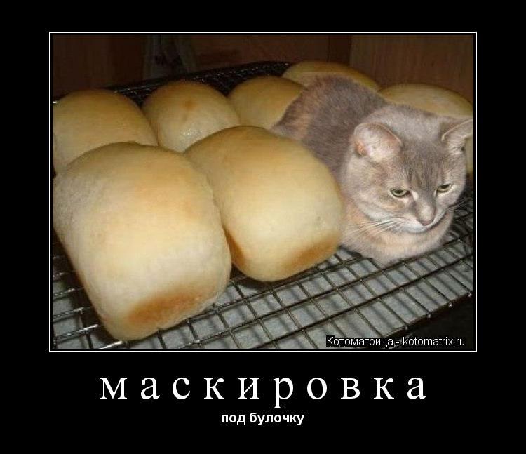 Котоматрица: маскировка под булочку