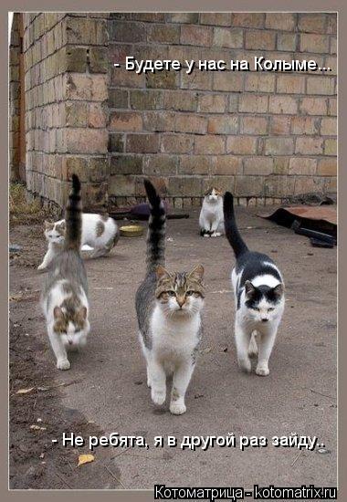 Котоматрица: - Будете у нас на Колыме... - Не ребята, я в другой раз зайду..