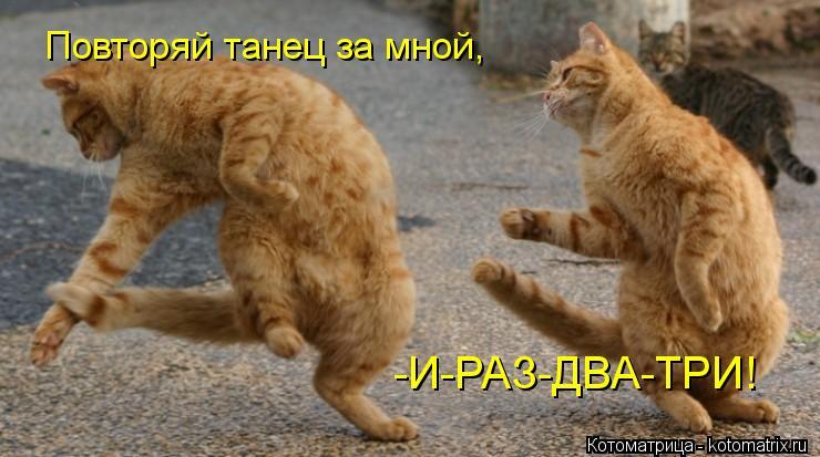 Котоматрица: Повторяй танец за мной,  -И-РАЗ-ДВА-ТРИ!