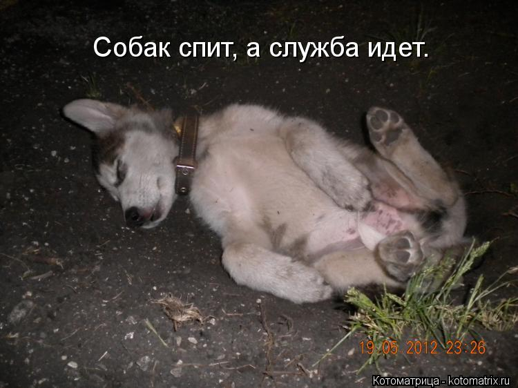 Котоматрица: Собак спит, а служба идет.