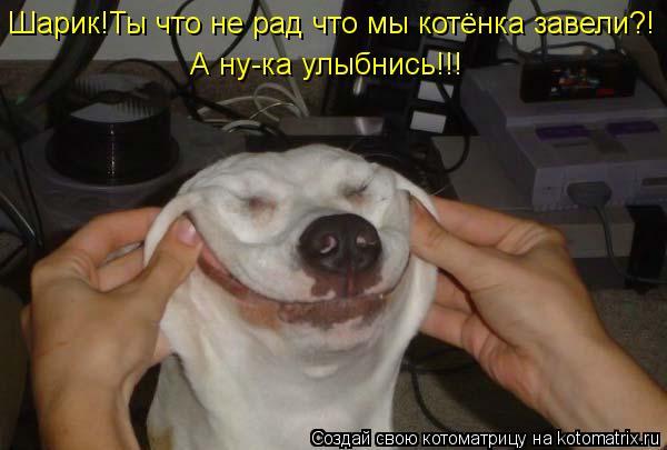 Котоматрица: Шарик!Ты что не рад что мы котёнка завели?! А ну-ка улыбнись!!!