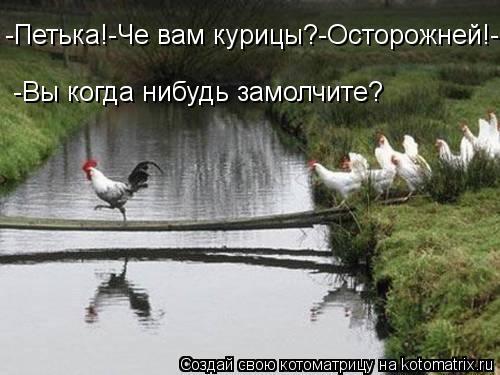 Котоматрица: -Петька!-Че вам курицы?-Осторожней!-Вы когда нибудь замолчите? -Вы когда нибудь замолчите?