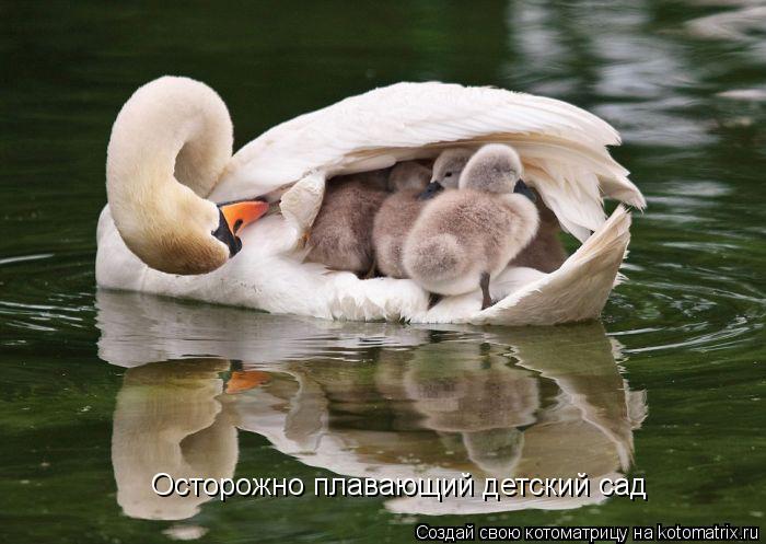 Котоматрица: Осторожно плавающий детский сад