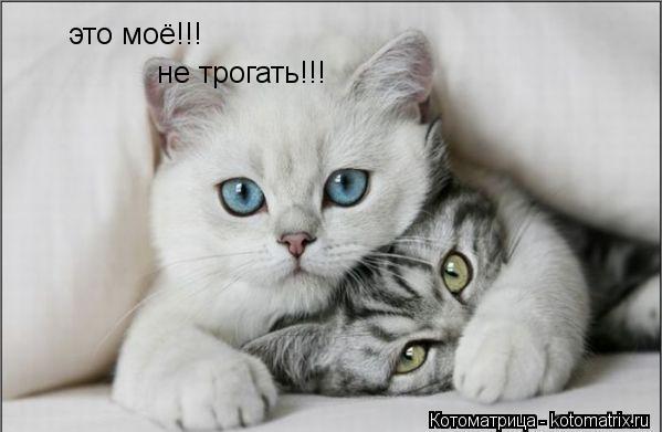 Котоматрица: это моё!!! не трогать!!!