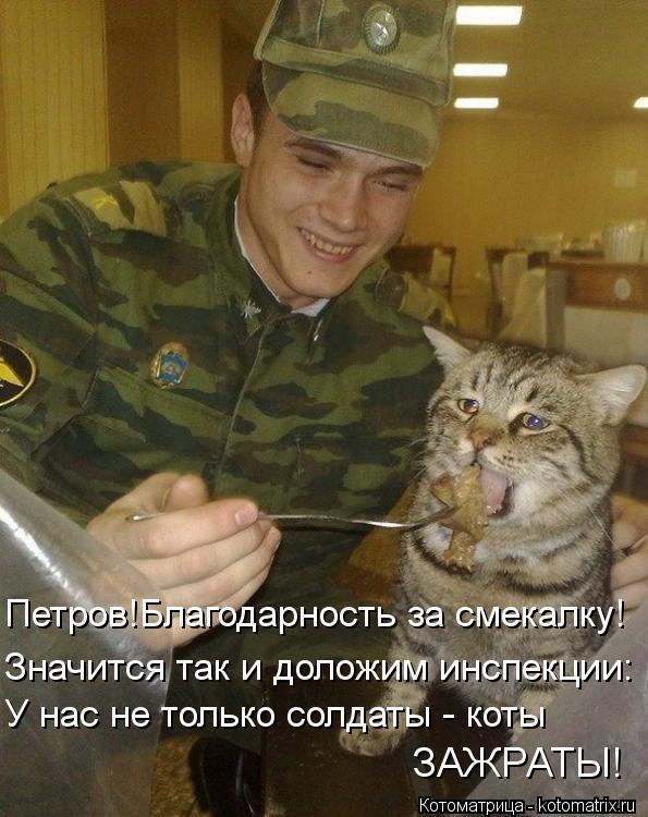 Котоматрица: Значится так и доложим инспекции: У нас не только солдаты - коты ЗАЖРАТЫ! Петров!Благодарность за смекалку!