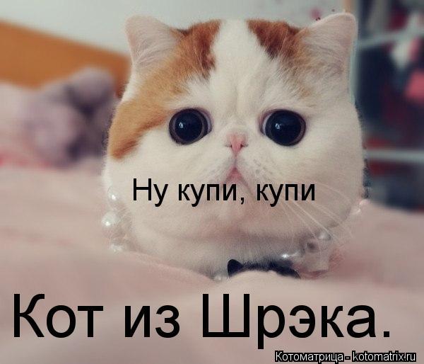 Котоматрица: Кот из Шрэка. Ну купи, купи