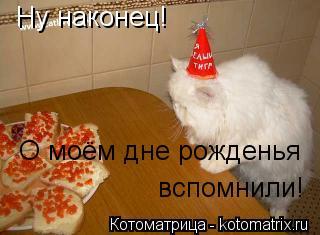 Котоматрица: Ну наконец! О моём дне рожденья вспомнили!